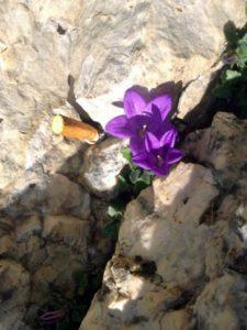 fiore-mozzicone